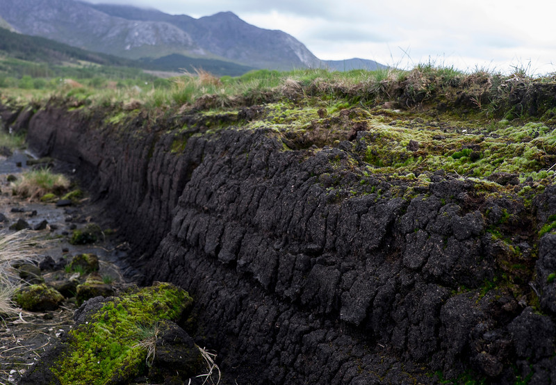 What peat looks like in the ground.