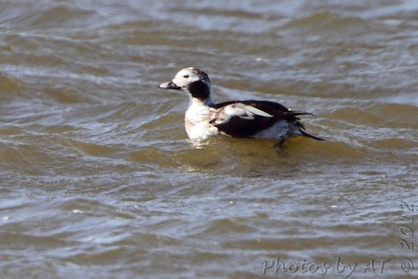 2012-03-12 Riverlands Migratory Bird Sanctuary