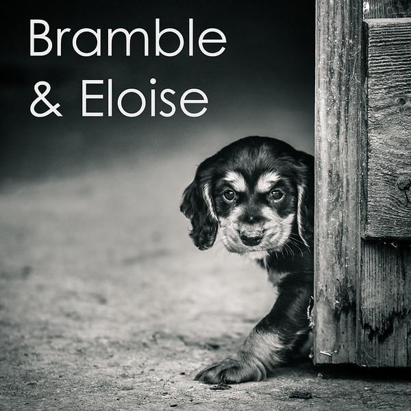 A-Bramble.jpg