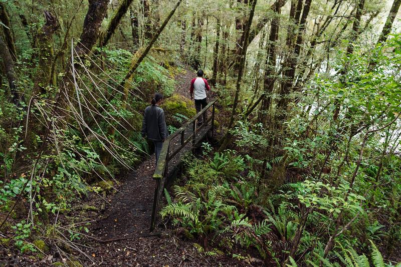 Trek through Beech Forest