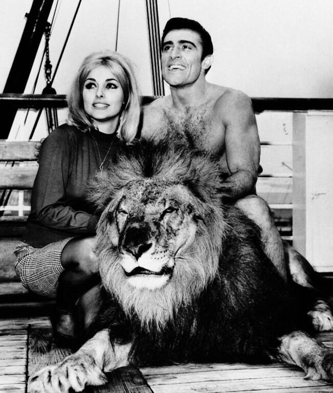 . Mike Henry, veteran linebacker of the Los Angeles Rams, is shown in a new role as the new Tarzan of the movies, with actress Sharon Tate, who will co-star in his first film, Jan. 22, 1965, in Hollywood.  With them is Major, a tame lion used in many jungle films.  (AP Photo/David F. Smith)