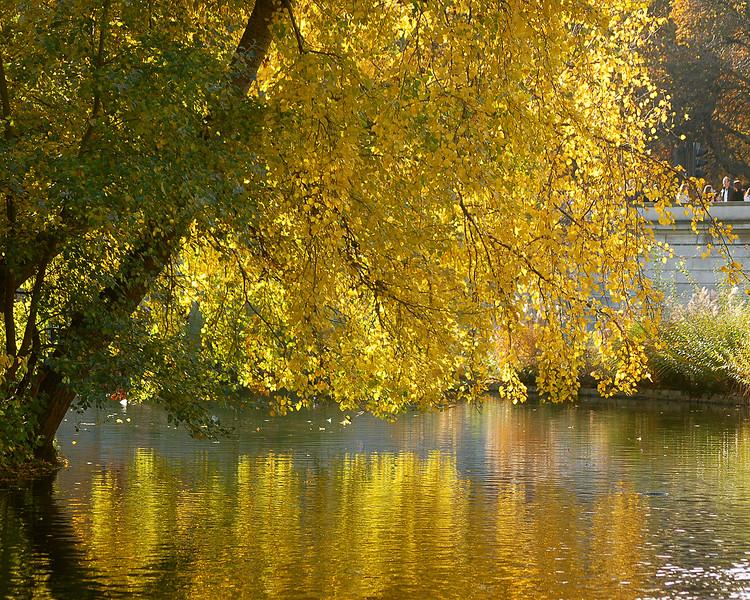 Fall Foliage: St. James's Park