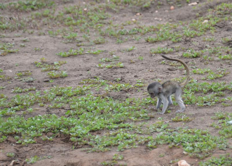 East Africa Safari 263.jpg