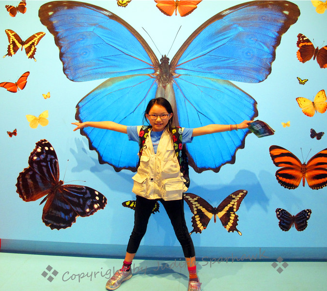 Emily the Butterfly - Judith Sparhawk