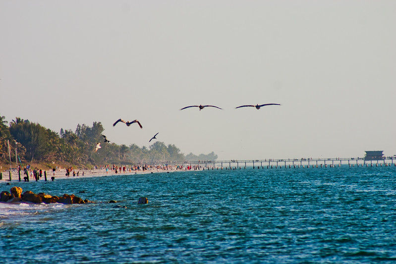 Pelicans and People in Florida