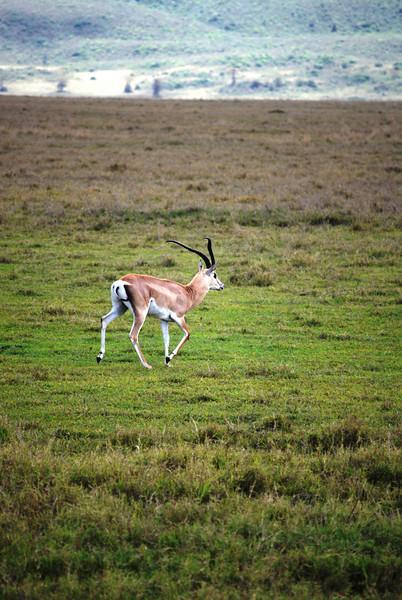 Ngorongoro (200).JPG