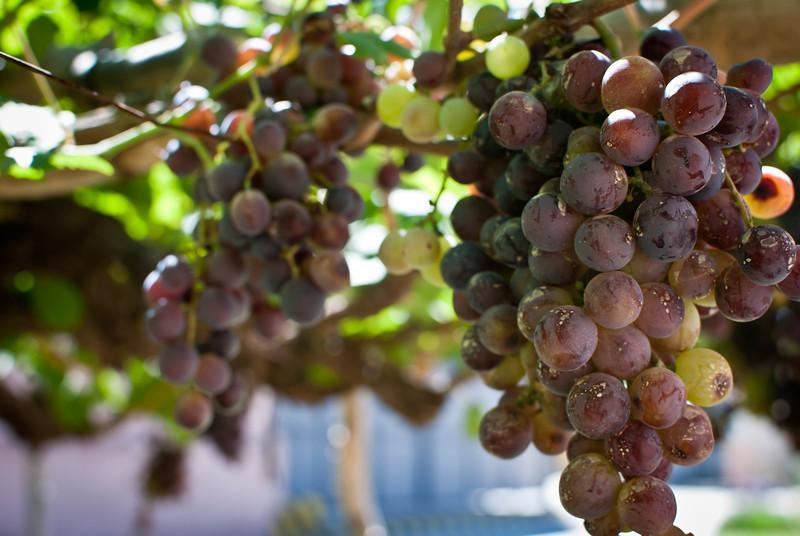 Cafayate 201203 El Porvenir Wine (17).jpg