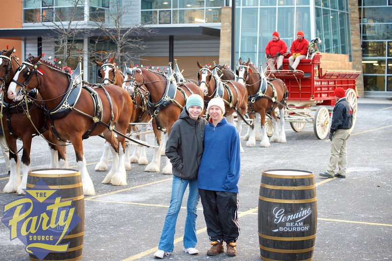 Clydesdale Portraits 92.jpg