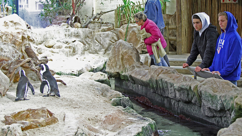 African penguins in aquarium