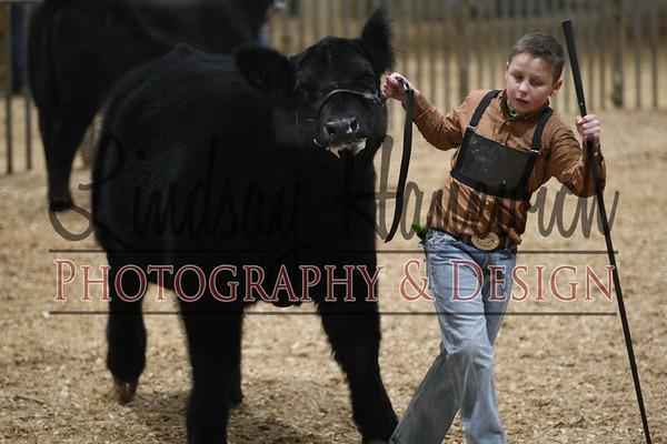 Ringshots - Steer