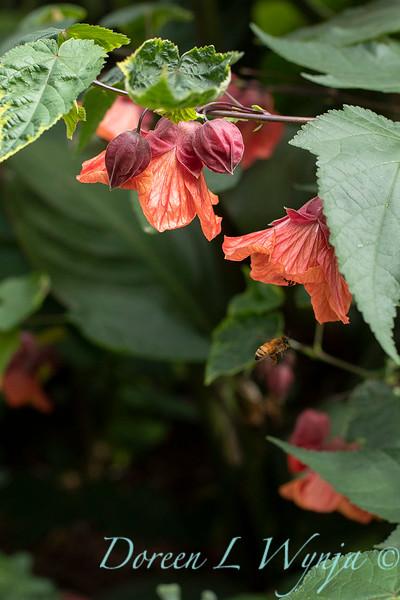 Lisa Bauer - designer's garden_1315.jpg