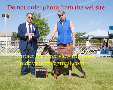 2019.06 FLATIRONS KENNEL CLUB WEEK-SUNDAY[who did not order yet]