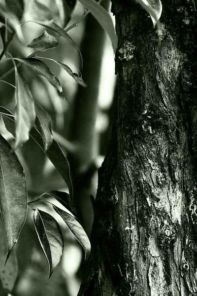 P52 - Week 4 Black & White - Black & White (and Green)
