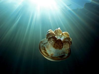 Jellyfish Lake - 2/20/10