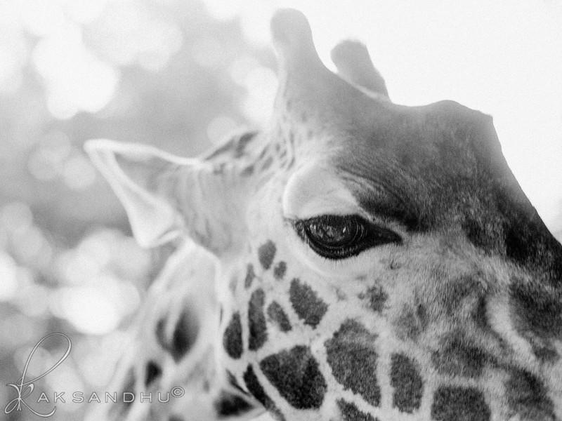 Safari-Africans-076.jpg