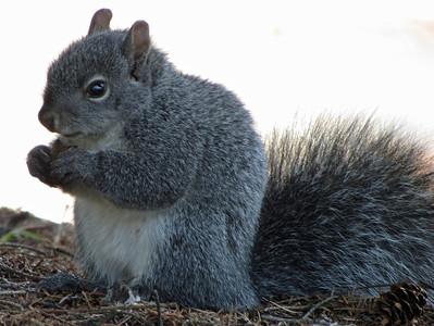 2012 mammals