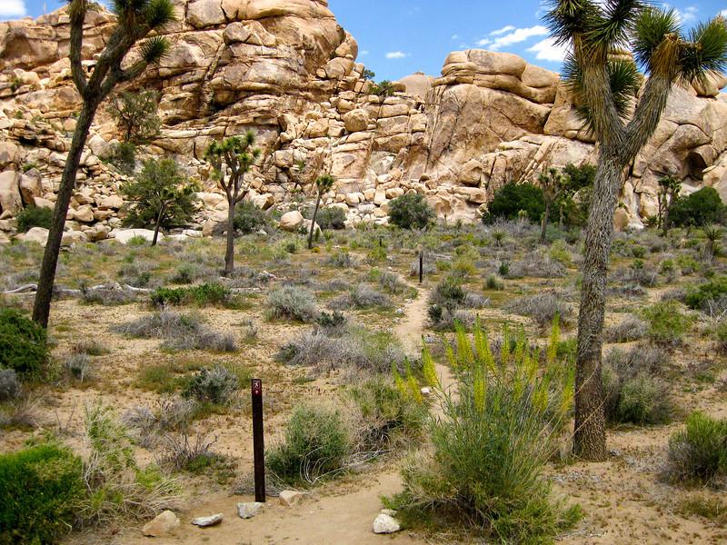 Steve's Canyon climbing area access trail, Joshua Tree National Park, CA