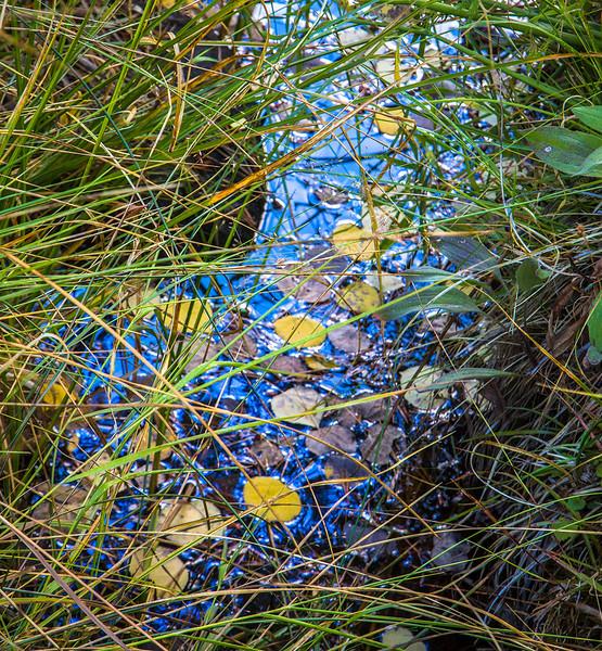 Bishop Creek Detail_MG_2363.jpg