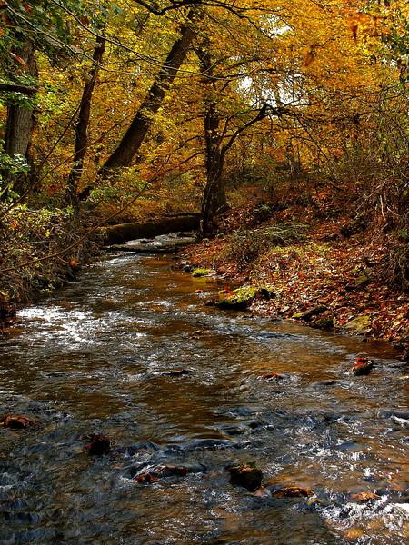 fall_splendor-c_hoopes_11_20141019_1114617653.jpg