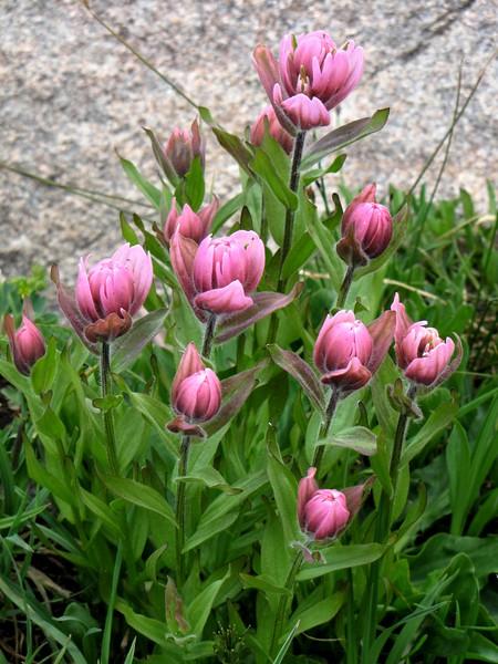 amh FLOWERS (1174).jpg