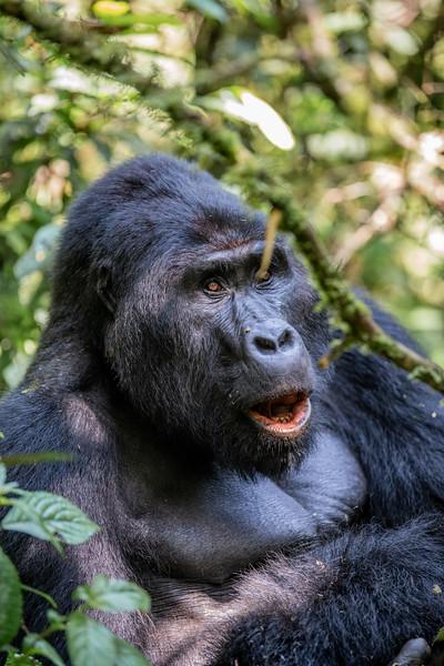Uganda_T_Gor-319.jpg