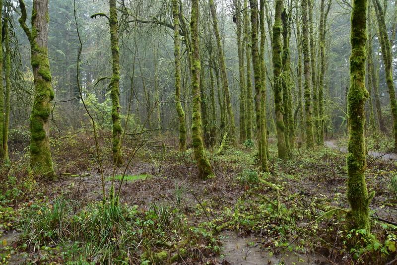 Portland Mossy Trees