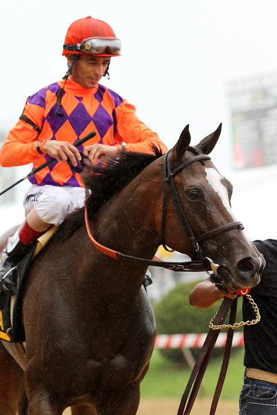 Summer Applause (Harlan's Holiday) and jockey John Velazquez win the Allaire Dupont Distaff Stakes (Gr II) at Pimlico Racecourse 5/18/13. Trainer: Chad Brown. Owner: Gillian Campbell, Greenwood Lodge Farm, Dan Clark & Greg Skoda