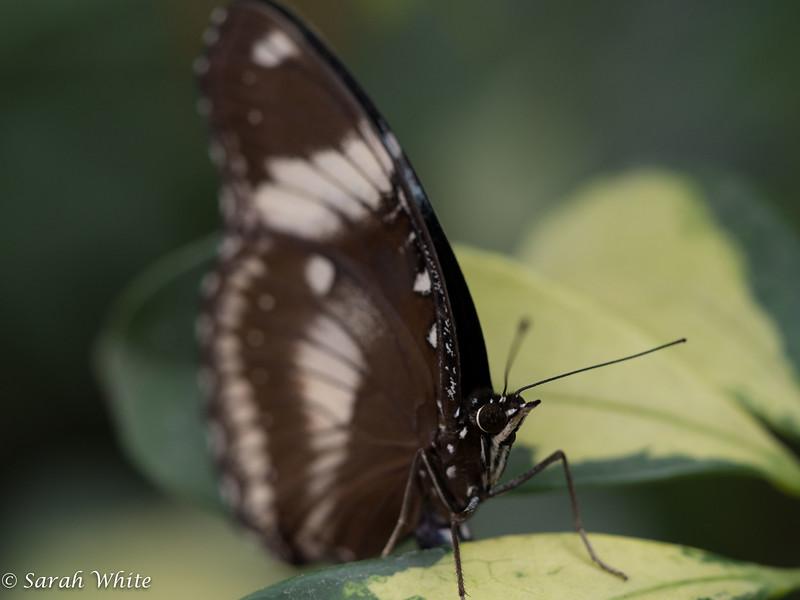 140503_ButterflyHouse_418.jpg