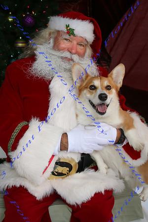 Corgis with Santa 2013