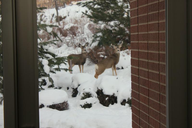 Deer_outside_May_01_06_2013_4545.JPG