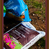 May 17, 2014<br /> <br /> Spring Gardening<br /> <br /> (137/365)<br /> <br /> Daily theme: Bag<br /> #fmsphotoaday