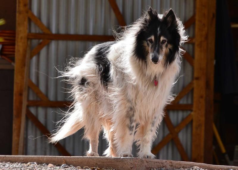 NEA_0500-7x5-Dog.jpg