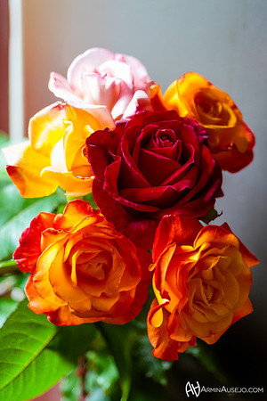 Roses, June 2013