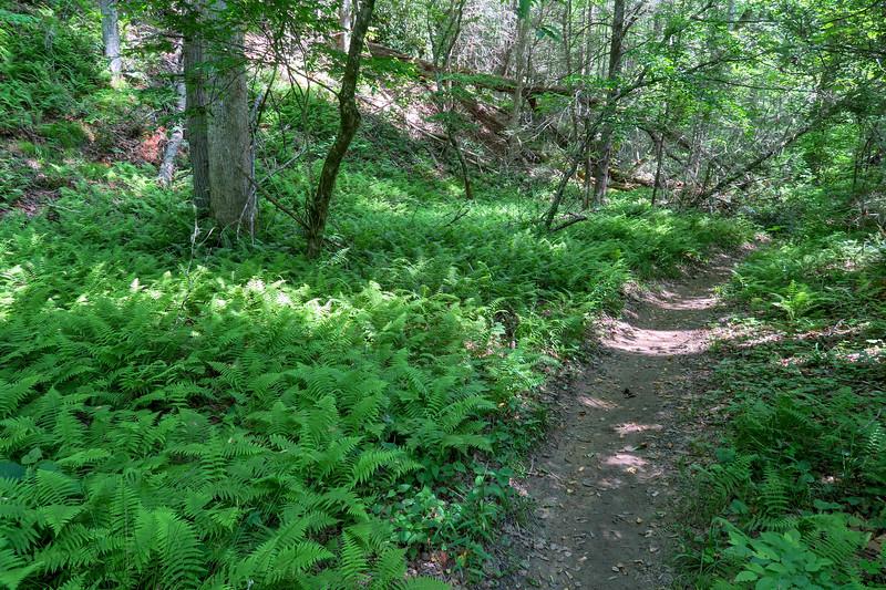 Bradley Creek Trail -- 2,340'