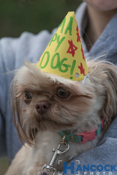 Odie 2nd Birthday Party-015.jpg