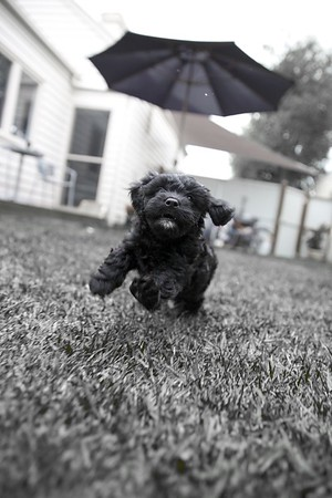 Puppy & Pet Photography