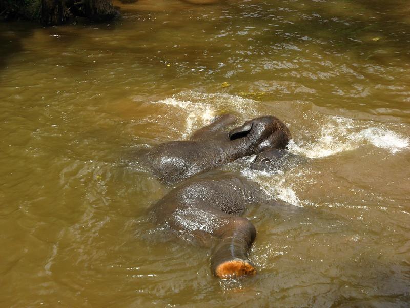 Two elephants really enjoying the river.