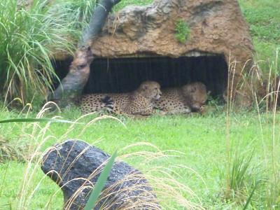 2012 - 09 - National Zoo