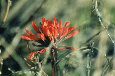 Red Rock Canyon State Park: Flora & Fauna