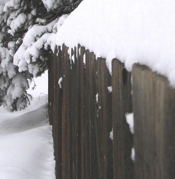 The Fence line.