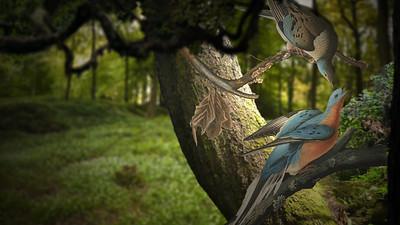 Audubon Animated
