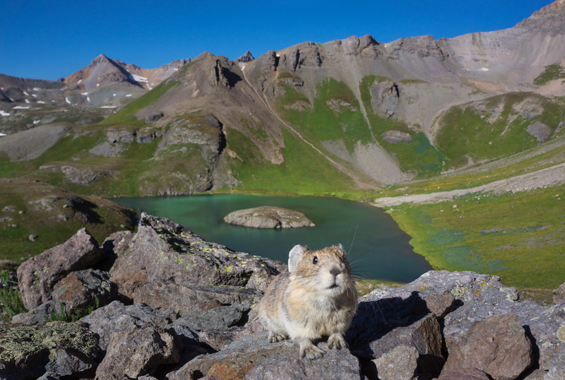 Island_Lake_Pika_Hank_Blum_Photography.jpg