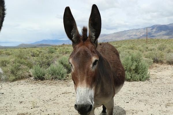 2019-05-22  Wildflowers, donkeys, Petroglyphs and Yoga