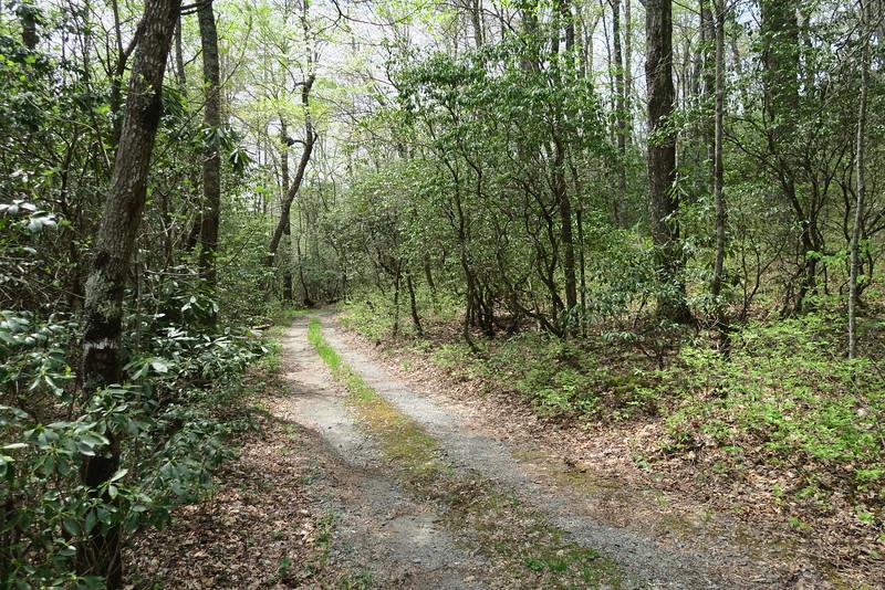 Biltmore Campus Trail -- Draw Road