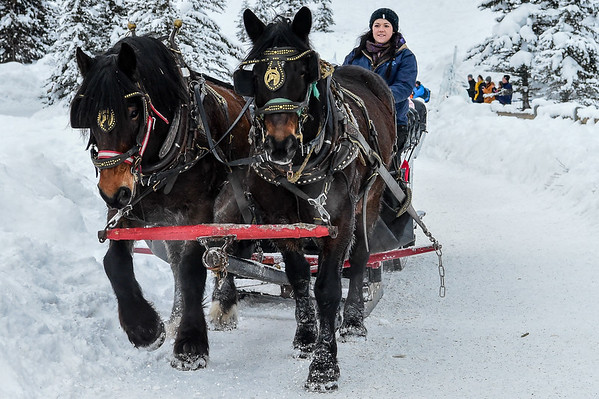 1-17-16 Horse & Sleigh Rides Chateau Lake Louise/Brewsters