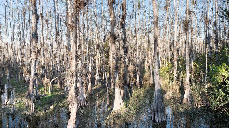 Everglades-108-Pano i5.jpg