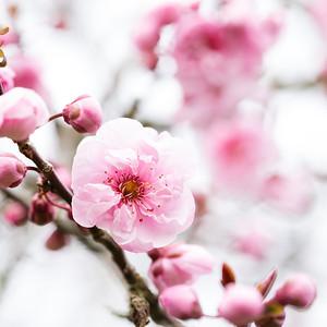 Spring Flowers - Lightroom Edit