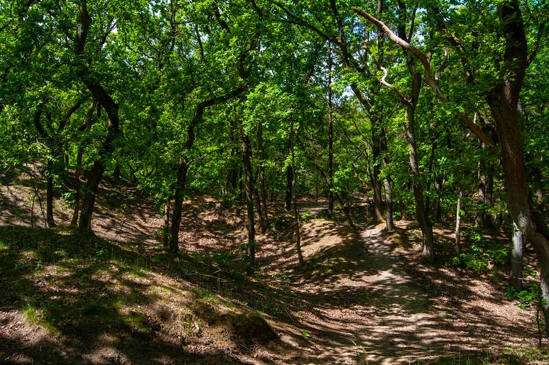 Nationaal Park Hoge Kempen - Duinengordel, omgeving Donderslag 07.jpg