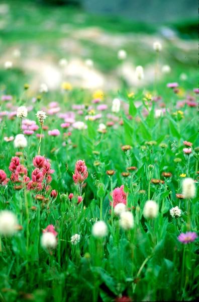 amh FLOWERS (1088).jpg