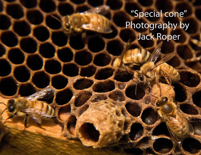 Bee farm Iowa  Special cone 098 copy.jpg
